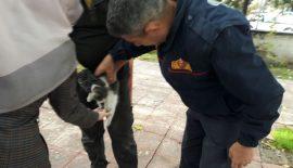 Mahsur Kalan Kedinin İmdadına İtfaiye Yetişti