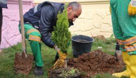 Siirt'te Yeşillendirme Çalışmaları Sürüyor